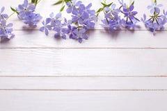Frontera con las flores azules blandas frescas Fotografía de archivo libre de regalías