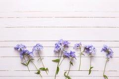 Frontera con las flores azules blandas frescas en los tablones de madera blancos Imagen de archivo libre de regalías