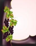 Frontera con las uvas rojas Foto de archivo libre de regalías