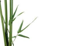 Frontera de bambú Imágenes de archivo libres de regalías