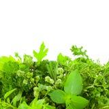 Frontera de diversas hierbas frescas de la especia sobre el fondo blanco imagen de archivo libre de regalías