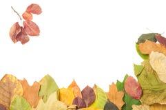 Frontera de dos lados de las hojas de otoño secas Fotografía de archivo