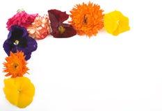 Frontera de flores Fotos de archivo libres de regalías