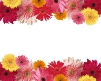 Frontera de flores imagen de archivo