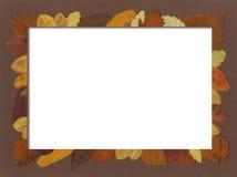 Frontera de hojas Imagen de archivo libre de regalías