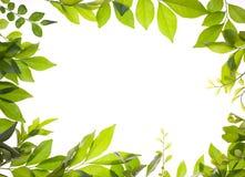 Frontera de hojas jovenes frescas Imagen de archivo
