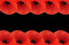 Frontera de la amapola Imagen de archivo libre de regalías