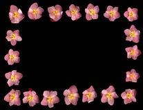 Frontera de la begonia Fotos de archivo libres de regalías