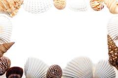 Frontera de la concha marina Capítulo de las cáscaras clasificadas del mar Anillo de la naturaleza imagenes de archivo