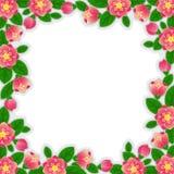 Frontera de la flor Imágenes de archivo libres de regalías