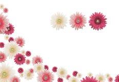 Frontera de la flor fotos de archivo libres de regalías