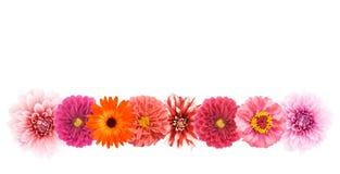 Frontera de la flor Fotografía de archivo