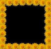Frontera de la flor Imagen de archivo libre de regalías