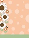 Frontera de la flor de la margarita Fotografía de archivo libre de regalías