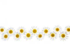 Frontera de la flor de la margarita Imagen de archivo libre de regalías