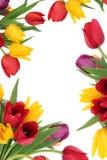 Frontera de la flor del tulipán Imagenes de archivo