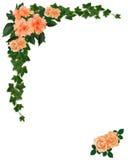 Frontera de la hiedra, del hibisco y de las rosas stock de ilustración