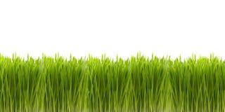 Frontera de la hierba verde Imagen de archivo libre de regalías