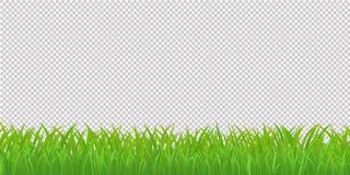 Frontera de la hierba verde, aislada en fondo transparente Vector i stock de ilustración
