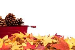 Frontera de la hoja del otoño con los pinecones Fotografía de archivo libre de regalías