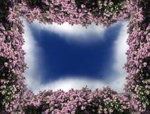 Frontera de la lila Fotografía de archivo