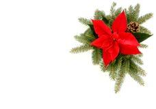 Frontera de la Navidad de la poinsetia, de las ramas de árbol de abeto y del cono del pino Foto de archivo