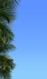 Frontera de la palmera Foto de archivo