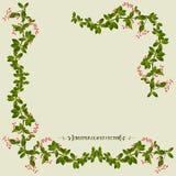 Frontera de la planta de la flor de la enredadera Fotos de archivo