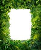 Frontera de la selva Fotos de archivo