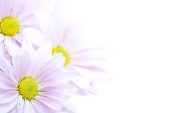 Frontera de las flores Foto de archivo libre de regalías