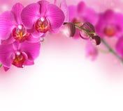 Frontera de las flores de las orquídeas imágenes de archivo libres de regalías