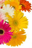 Frontera de las flores del gerbera imagen de archivo