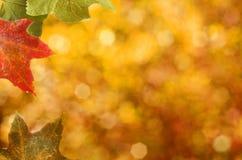 Frontera de las hojas de otoño Fotografía de archivo libre de regalías