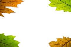 Frontera de las hojas de otoño Fotos de archivo libres de regalías