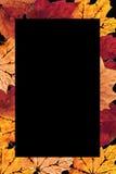 Frontera de las hojas de otoño Fotos de archivo
