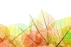 Frontera de las hojas transparentes del color del otoño - aisladas en blanco Imagen de archivo libre de regalías