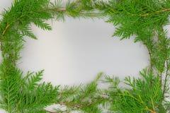 Frontera de las ramas del cedro y del tamarack imagen de archivo