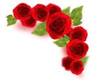 Frontera de las rosas imágenes de archivo libres de regalías