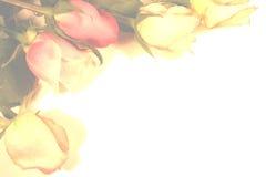 Frontera de las rosas Imagenes de archivo