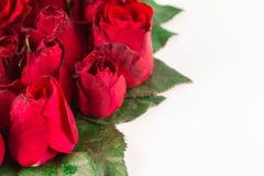 Frontera de las rosas rojas hermosas frescas del jardín aisladas en el fondo blanco Tarjeta de felicitación con rosas rojas Fotos de archivo