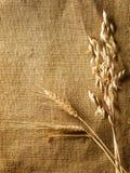 Frontera de los oídos del trigo Fotos de archivo libres de regalías