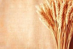 Frontera de los oídos del trigo en copia-espacio de la arpillera background Foto de archivo libre de regalías