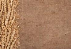 Frontera de los oídos del trigo Imagenes de archivo