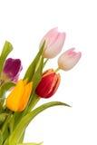 Frontera de los tulipanes de Pascua Foto de archivo libre de regalías