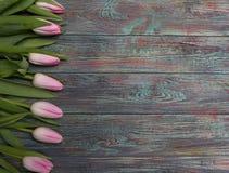 Frontera de los tulipanes rosados frescos de la primavera Imagenes de archivo