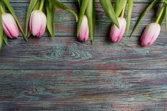 Frontera de los tulipanes rosados frescos de la primavera Fotos de archivo