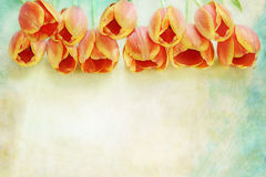 Frontera de tulipanes anaranjados Imagen de archivo