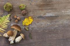 Frontera decorativa de la derecha del otoño con las castañas, las nueces, las avellanas, las bellotas, los ceps, y fondo de mader Foto de archivo
