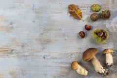 Frontera decorativa de la derecha del otoño con las castañas, las nueces, las avellanas, las bellotas, los ceps, y las hojas en e Fotos de archivo libres de regalías