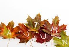 Frontera decorativa de las hojas de otoño con el texto Fotografía de archivo